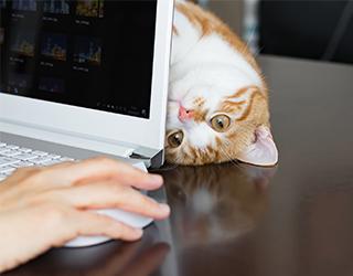 テレワークでのパソコンでご主人さまに甘える猫